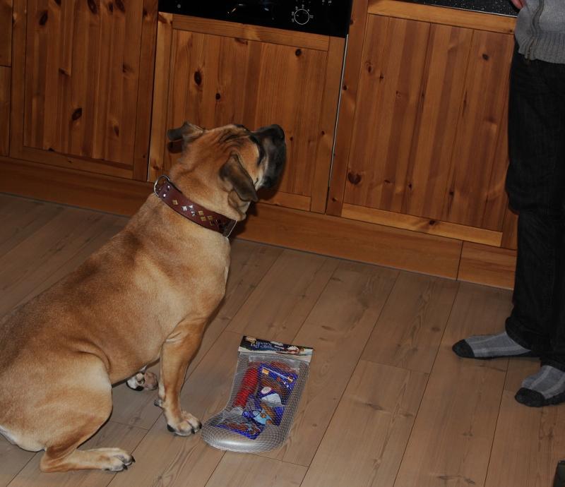 hunde julestrømpe