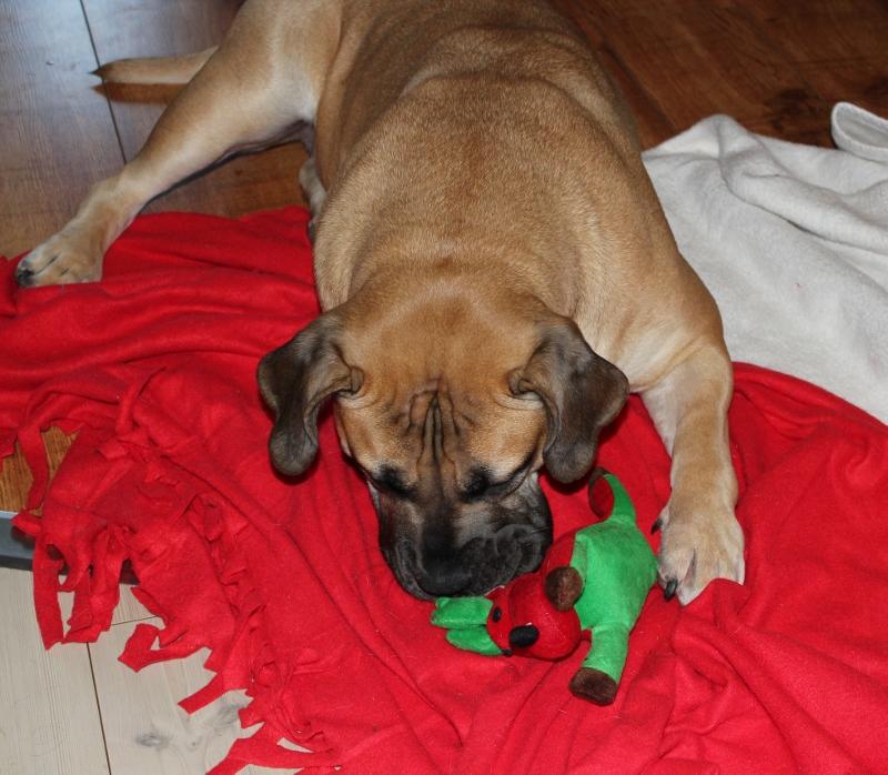 julegave til hund