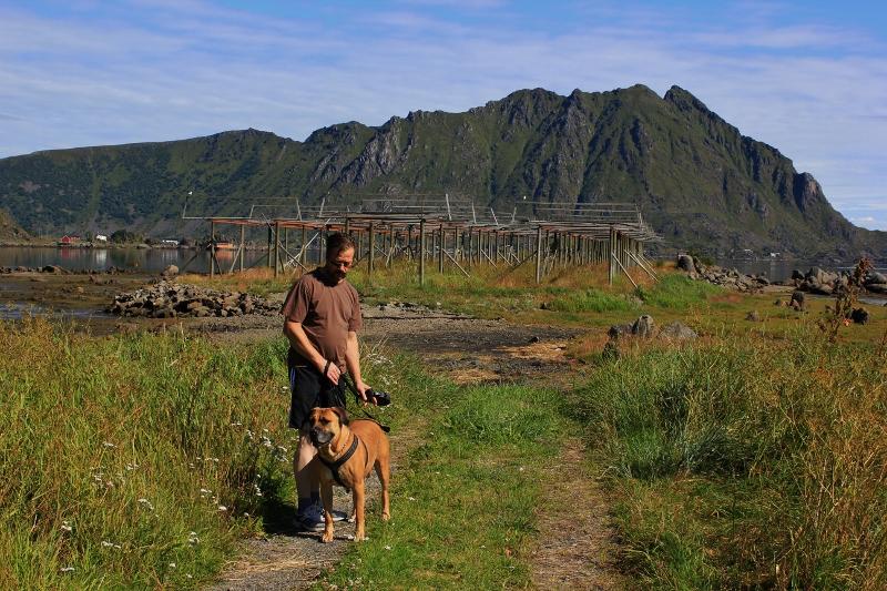 Boerboel i Lofoten