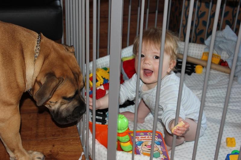 hund barn