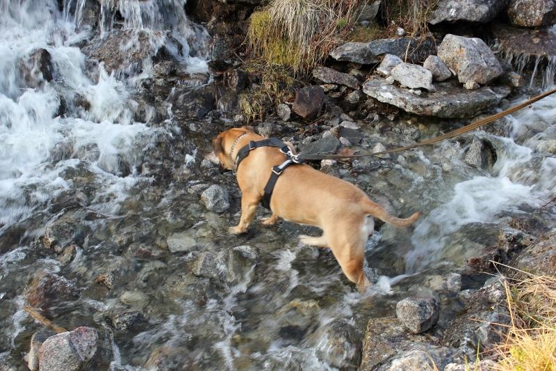Boerboel vann