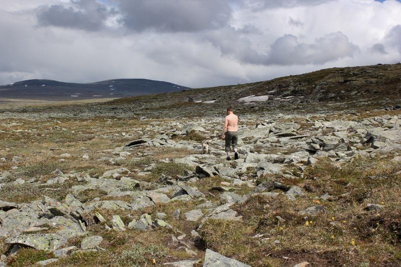 hund og folk på fjellet