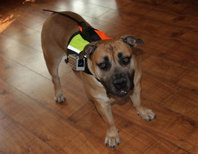 Hundevest kameravest GPS vest