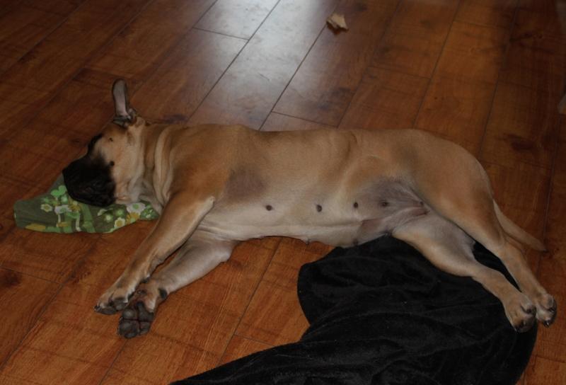hund med koseklut