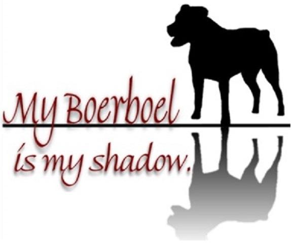 Boerboel shadow