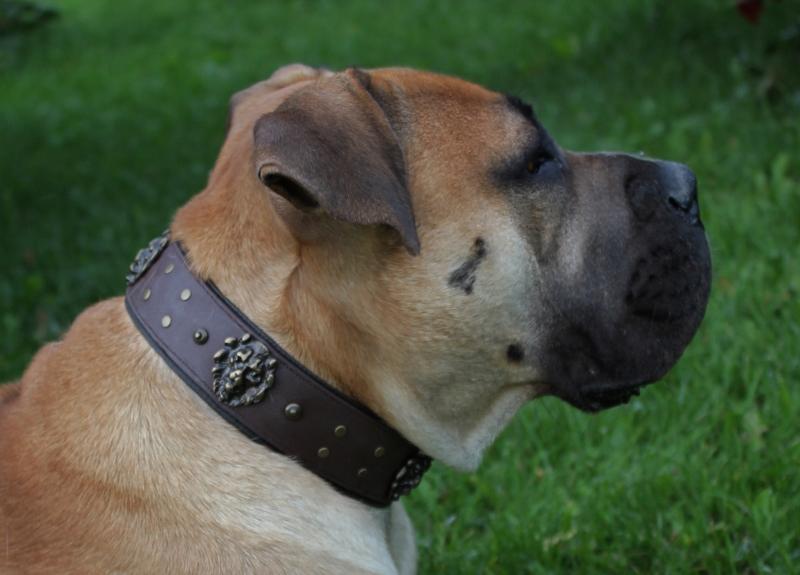 Halsbånd til stor hund