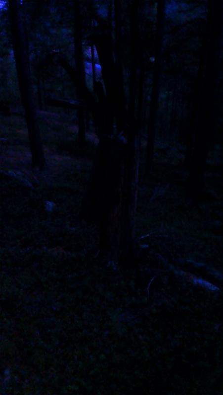 skummel sak i skogen
