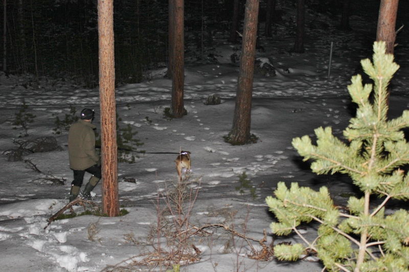 dyrespor i skogen