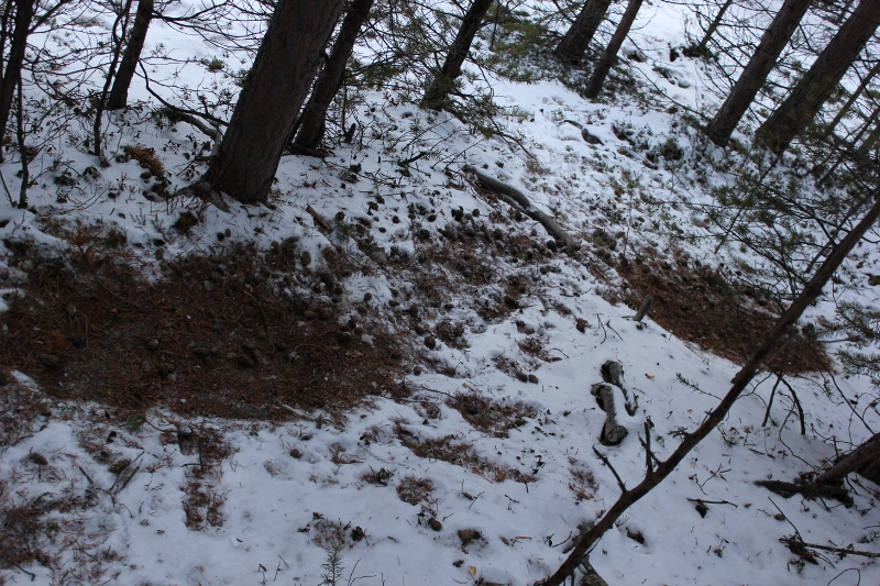 hvilested til hjort