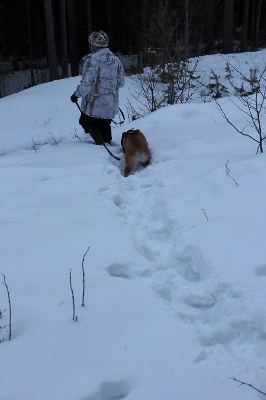 hund som går bak