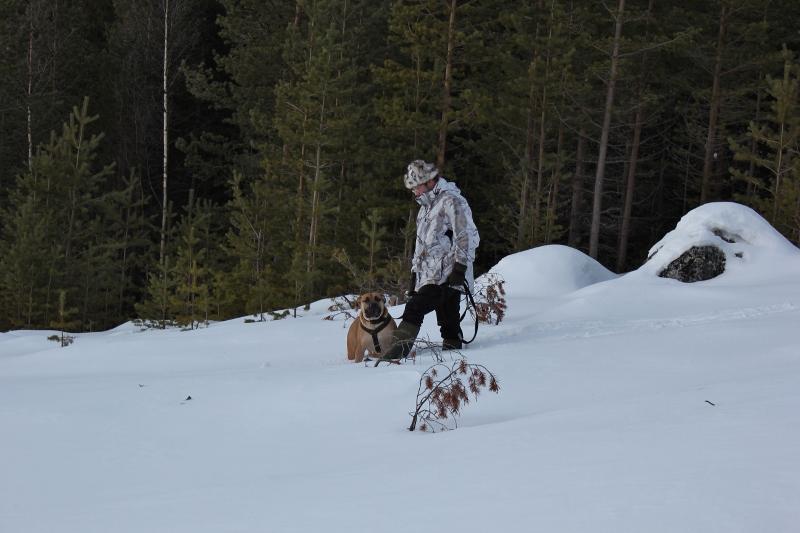 vinter boerboel