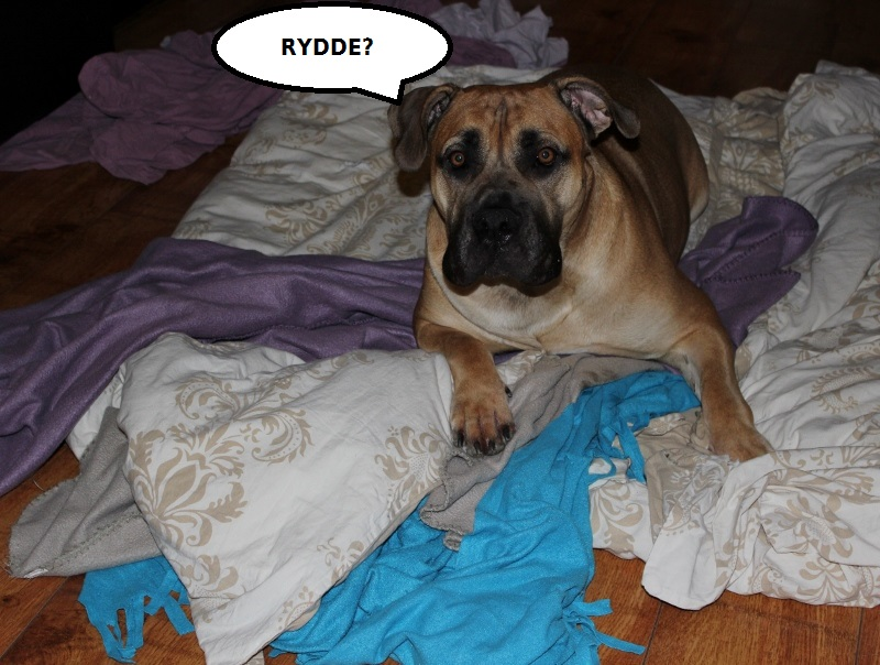 hund rydder