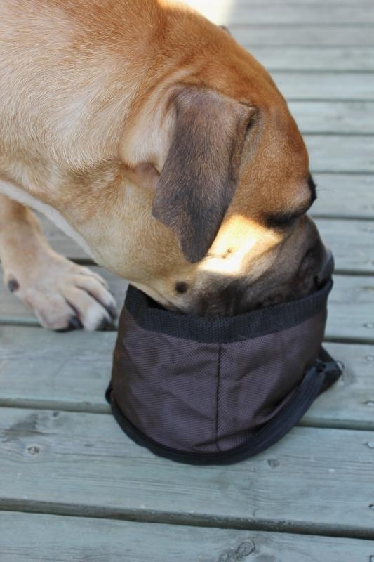 vannkopp til hund på tur