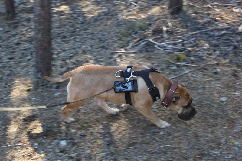 hund med endomondo