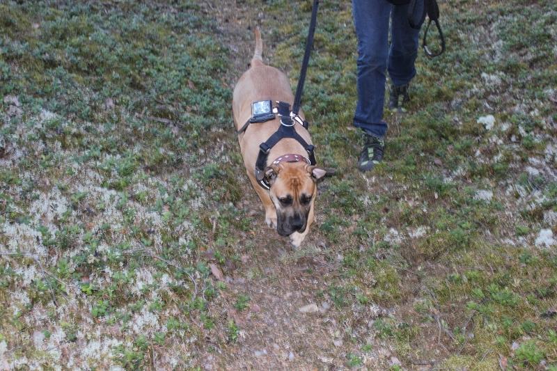 hund med treningsapp