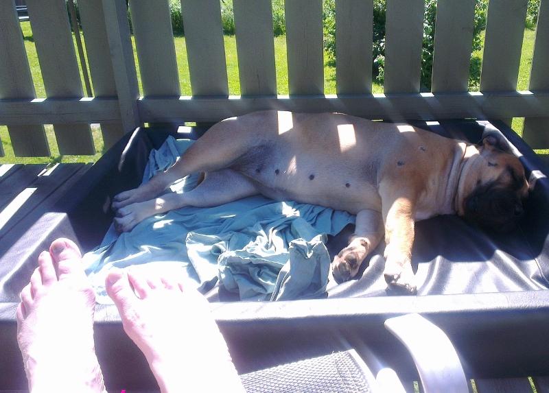 hund i solen