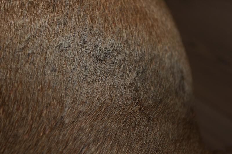 hudproblem hund