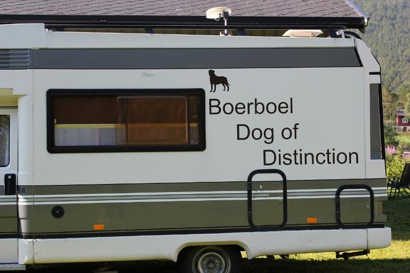boerboel dog of distinction