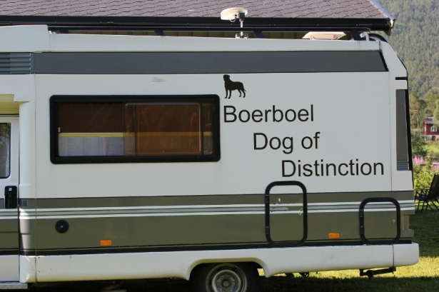 boerboel dog of distinction