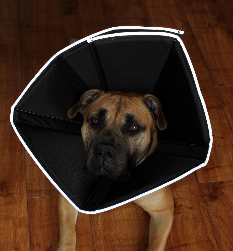 sårskjerm stor hund comfy cone