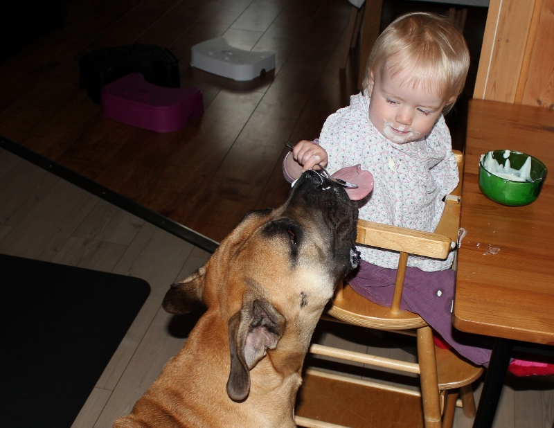 baby and boerboel
