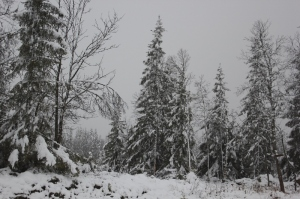 vintervær