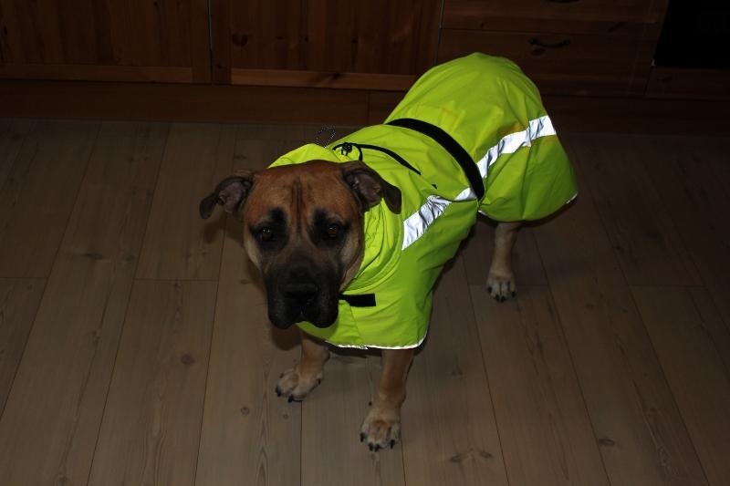 regndekken til stor hund