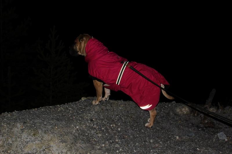 dekken til boerboel stor hund