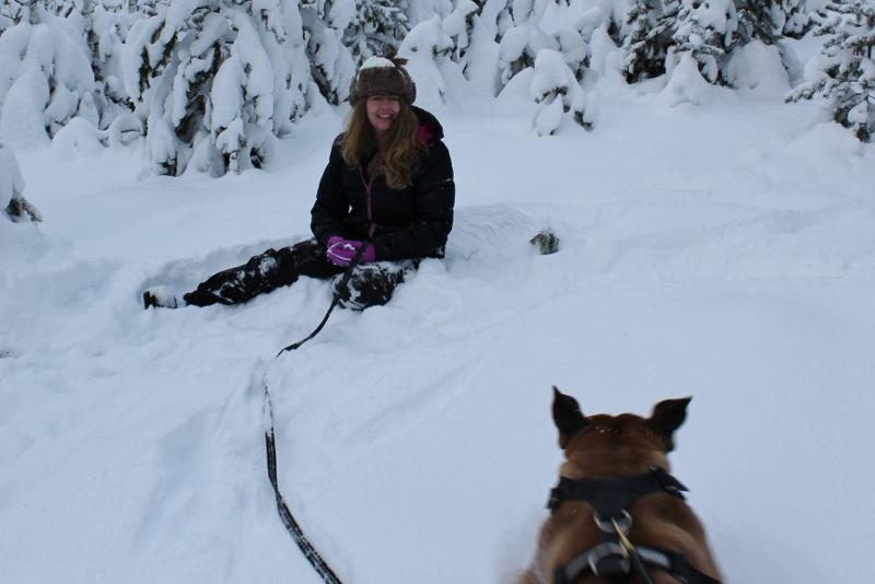 lek med boerboel i snøen