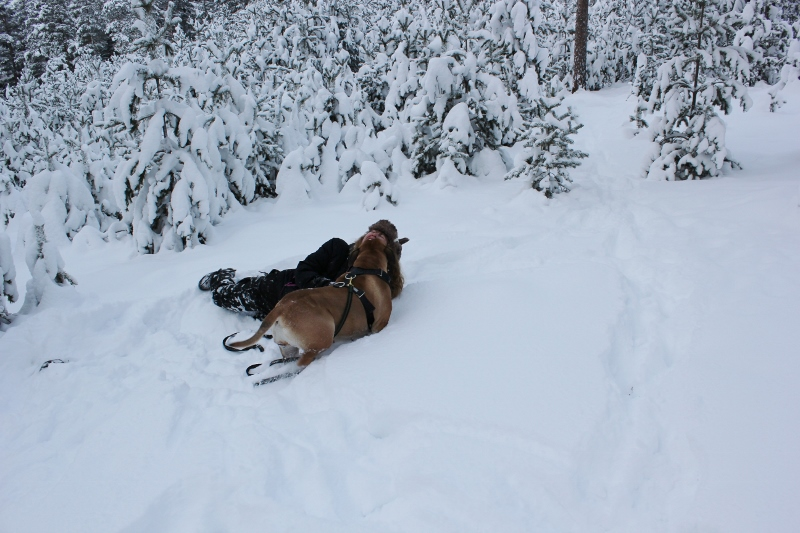 play with the boerboel in the snow