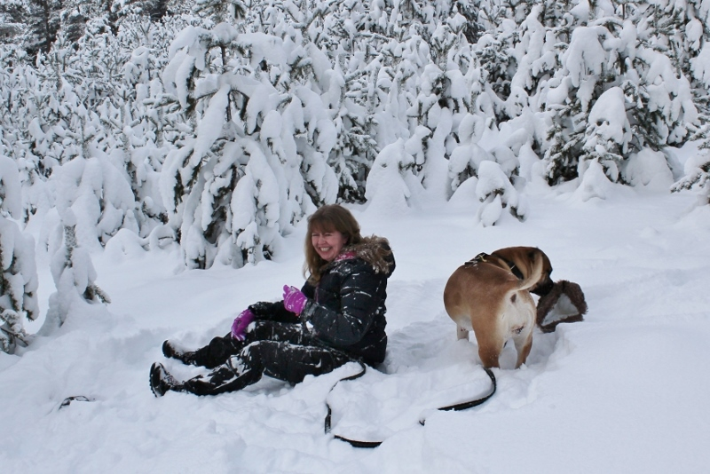 play with the boerboel in the sno
