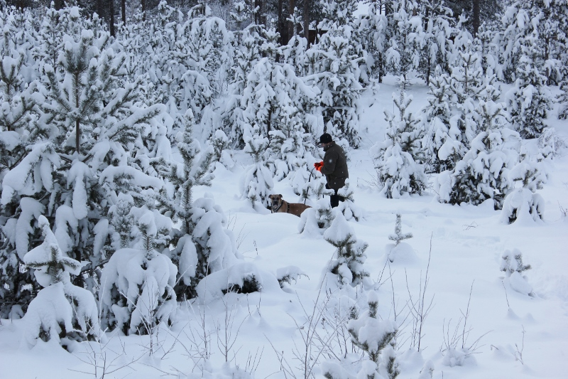 boerboel i skogen