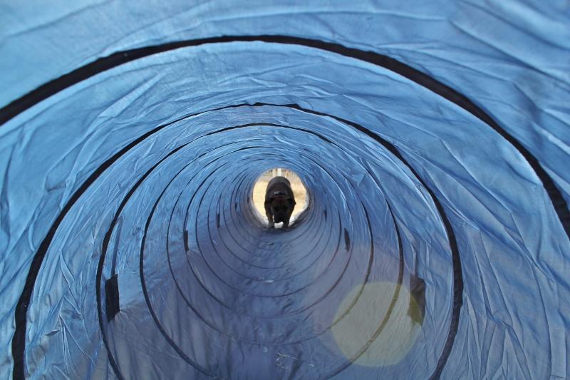 agilitytunnel boerboel