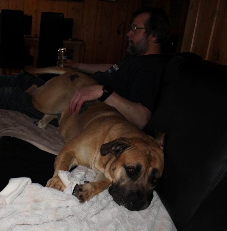 boerboel i sofa