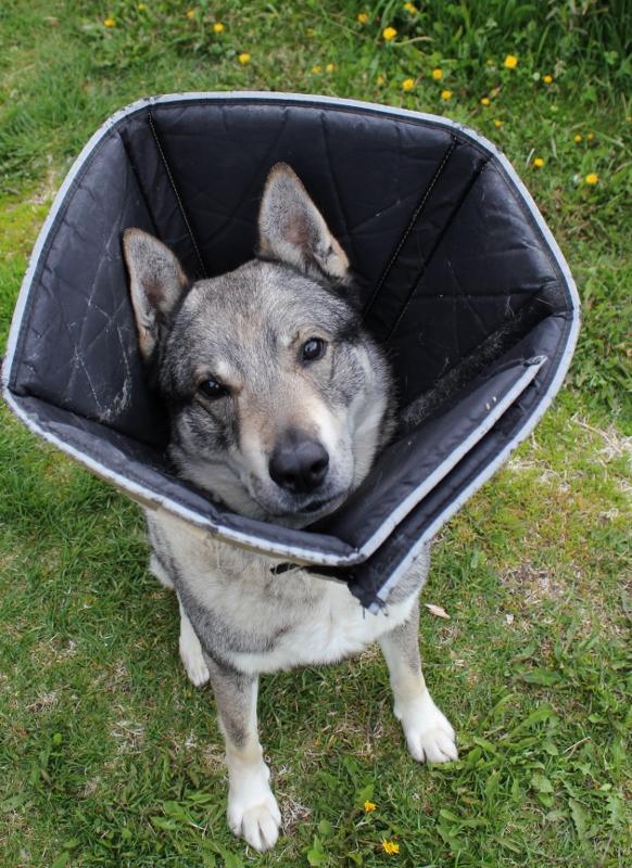 hund med myk skjerm
