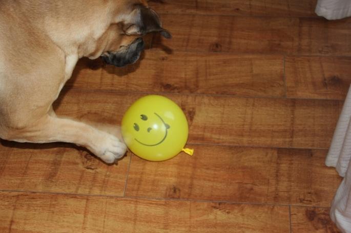 ballong hund