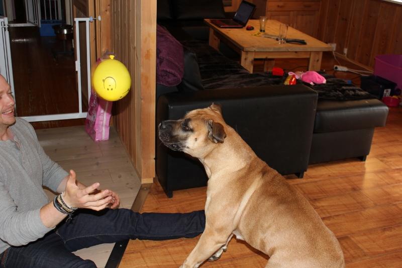 hund og ballong