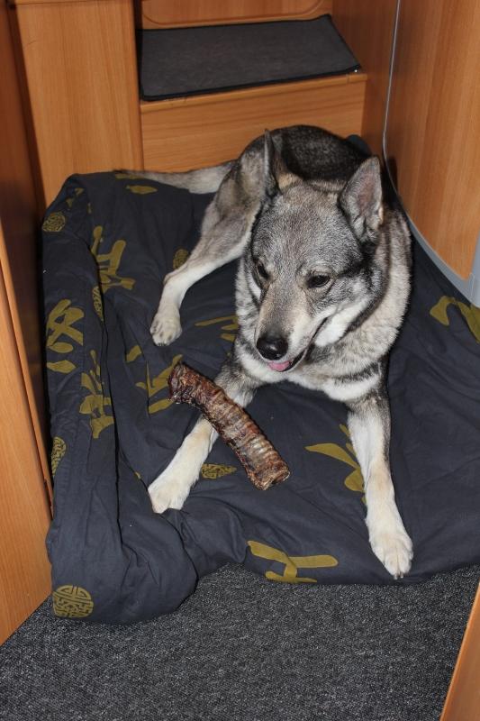 hund i bobil