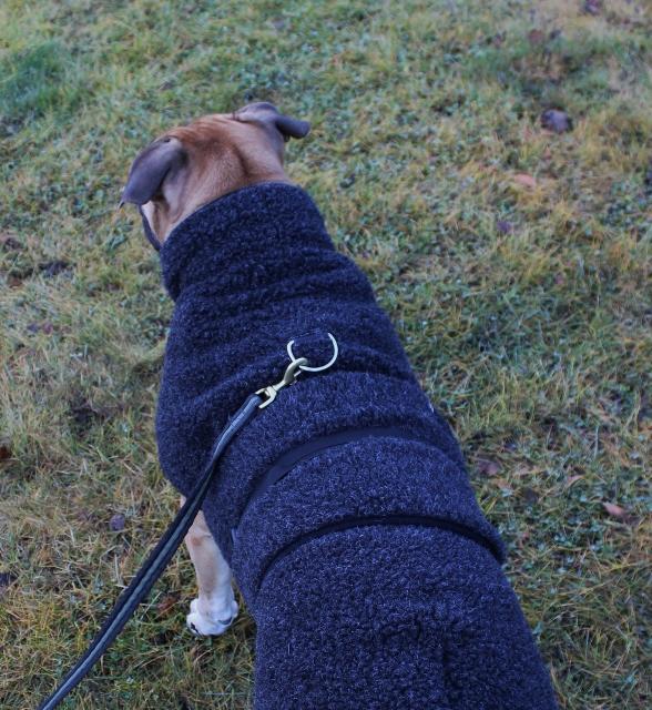 ulldekken hund